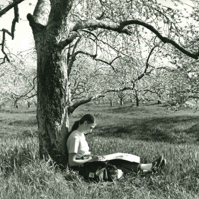 Student under apple tree