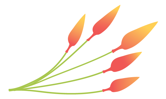 illustration of a plant with flame shaped flowers