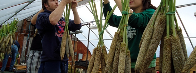 students with pearl millet