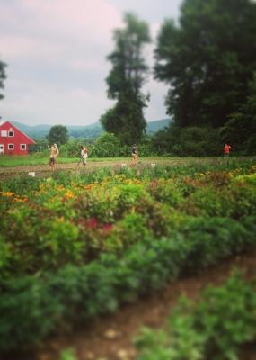 working in the fields
