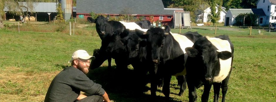 Pete with cows