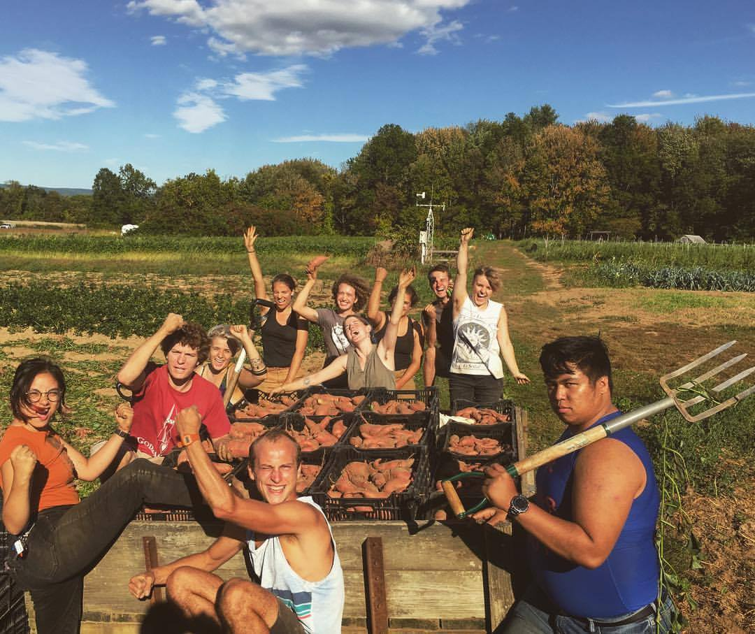 group of students cheering sweet pototo harvest