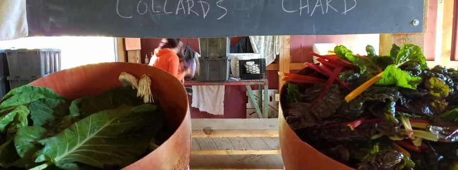 buckets of collard and chard