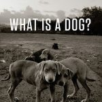 What is a Dog? cover