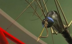 mosquito Harun Yahya creation evolution